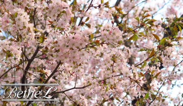 【春の訪れ?,】
